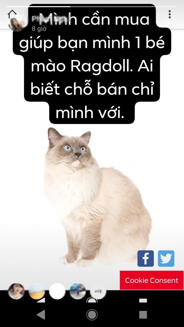 Cô gái trong chuyện hỏi mua mèo nhưng bị thanh niên vặn vẹo lên tiếng: Không biết bạn đó là ai, nổi tiếng cỡ nào - Ảnh 3.