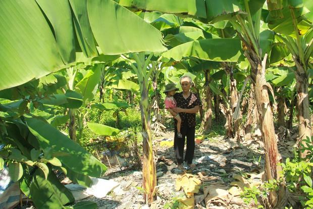 Xót xa cụ bà sống cùng con cháu trong túp lều quây bạt không điện nước suốt 24 năm ở Vĩnh Phúc - Ảnh 2.