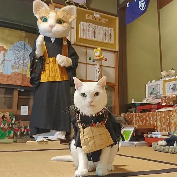 """Muốn biết mèo Nhật Bản """"quyền lực"""" ra sao, cứ đến ngôi đền """"Meo Meo Tự"""" nơi có trụ trì lẫn chú tiểu đều là… mèo! - Ảnh 1."""