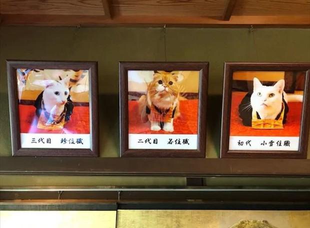 """Muốn biết mèo Nhật Bản """"quyền lực"""" ra sao, cứ đến ngôi đền """"Meo Meo Tự"""" nơi có trụ trì lẫn chú tiểu đều là… mèo! - Ảnh 12."""