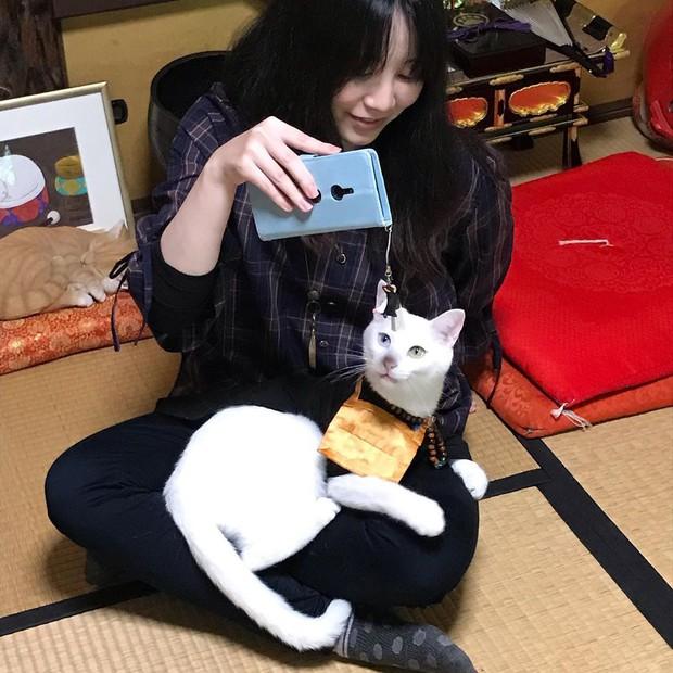 """Muốn biết mèo Nhật Bản """"quyền lực"""" ra sao, cứ đến ngôi đền """"Meo Meo Tự"""" nơi có trụ trì lẫn chú tiểu đều là… mèo! - Ảnh 10."""