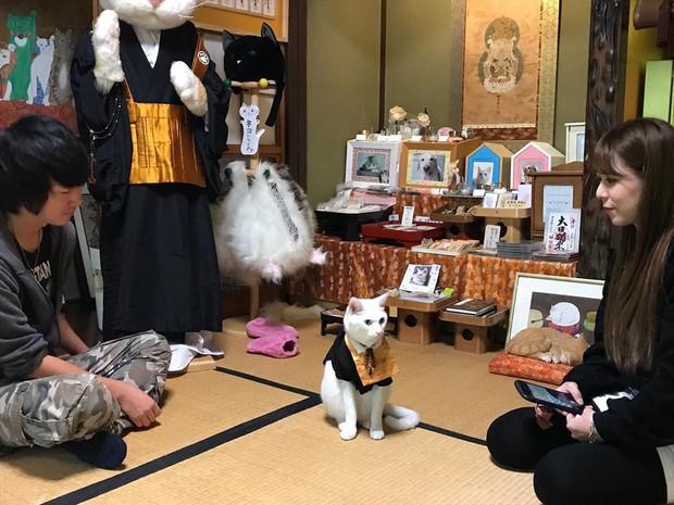 """Muốn biết mèo Nhật Bản """"quyền lực"""" ra sao, cứ đến ngôi đền """"Meo Meo Tự"""" nơi có trụ trì lẫn chú tiểu đều là… mèo! - Ảnh 3."""