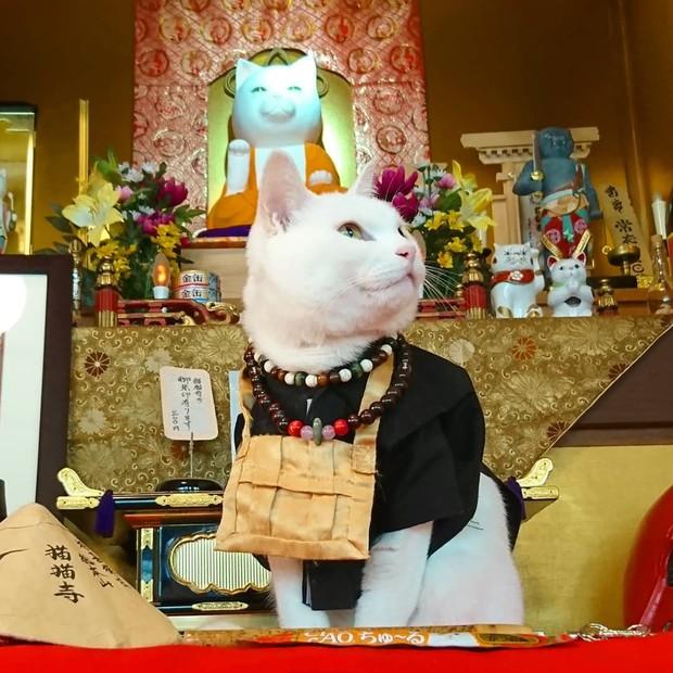 """Muốn biết mèo Nhật Bản """"quyền lực"""" ra sao, cứ đến ngôi đền """"Meo Meo Tự"""" nơi có trụ trì lẫn chú tiểu đều là… mèo! - Ảnh 8."""