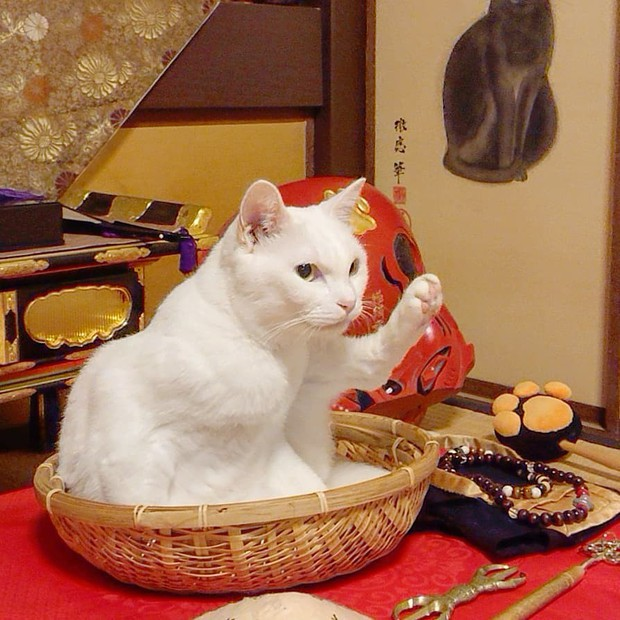 """Muốn biết mèo Nhật Bản """"quyền lực"""" ra sao, cứ đến ngôi đền """"Meo Meo Tự"""" nơi có trụ trì lẫn chú tiểu đều là… mèo! - Ảnh 2."""