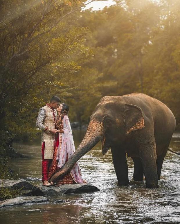Xu hướng nhờ voi gọi dậy ăn sáng của giới trẻ ở Thái Lan.