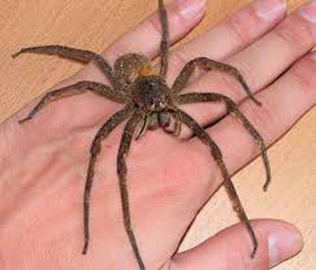 Hốt hoảng vì phát hiện nhện trong xe, chàng trai gây tai nạn giao thông trên đường cao tốc - Ảnh 1.