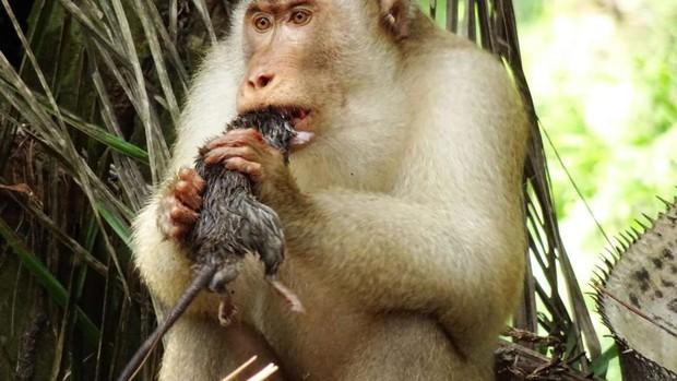 Khoa học sững sờ khi bắt gặp cảnh tượng kinh dị này trong rừng nhiệt đới, nhưng điều bất ngờ hơn là lợi ích tuyệt vời nó có thể mang lại - Ảnh 1.
