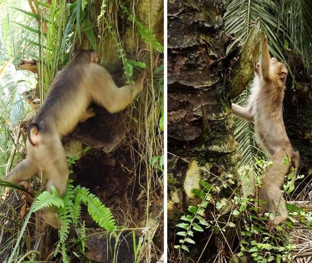 Khoa học sững sờ khi bắt gặp cảnh tượng kinh dị này trong rừng nhiệt đới, nhưng điều bất ngờ hơn là lợi ích tuyệt vời nó có thể mang lại - Ảnh 2.