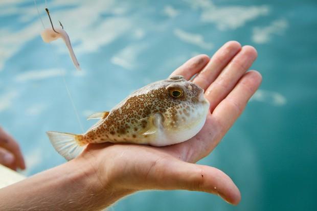 Khoa Pug liều mạng đi ăn cá nóc độc chết người ở Tokyo: sau này không thấy tôi ra video nữa là hiểu rồi nhé! - Ảnh 2.