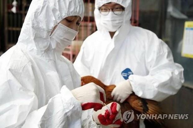 Hàn Quốc: Ca nghi nhiễm virus cúm gia cầm có thể gây tử vong ở người - Ảnh 1.