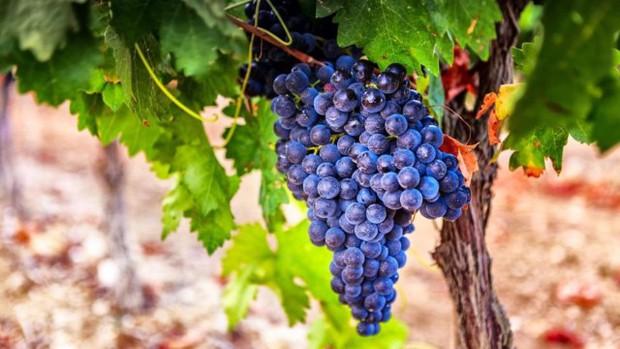 Câu chuyện về những chai rượu vang ảo thuật nhất hành tinh: Đổi vị liên tục và có giá hơn nửa tỉ mỗi chai - Ảnh 4.