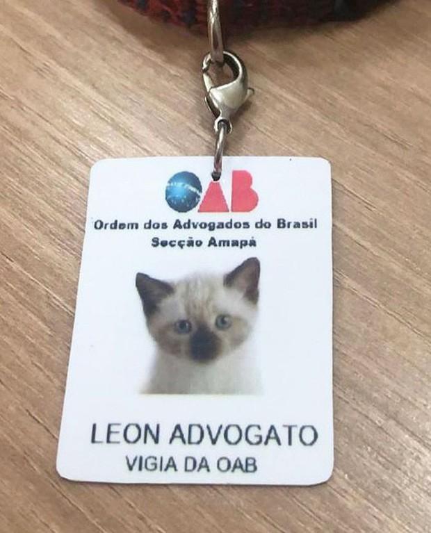 Boss mèo mặt dày lởn vởn ở văn phòng Hiệp hội Luật sư Brazil suốt 1 tuần liền, sau đấy được nhận vào làm chính thức luôn - Ảnh 3.