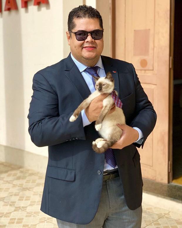 Boss mèo mặt dày lởn vởn ở văn phòng Hiệp hội Luật sư Brazil suốt 1 tuần liền, sau đấy được nhận vào làm chính thức luôn - Ảnh 4.