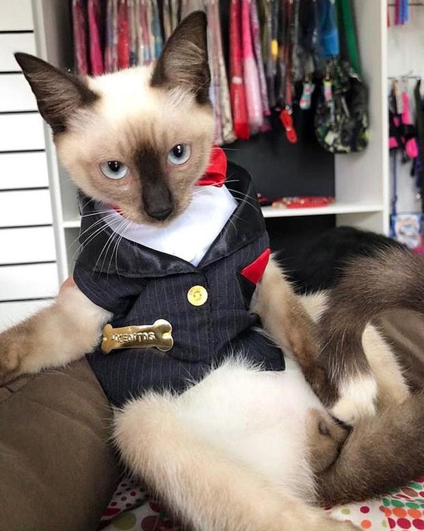 Boss mèo mặt dày lởn vởn ở văn phòng Hiệp hội Luật sư Brazil suốt 1 tuần liền, sau đấy được nhận vào làm chính thức luôn - Ảnh 6.