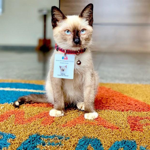 Boss mèo mặt dày lởn vởn ở văn phòng Hiệp hội Luật sư Brazil suốt 1 tuần liền, sau đấy được nhận vào làm chính thức luôn - Ảnh 7.