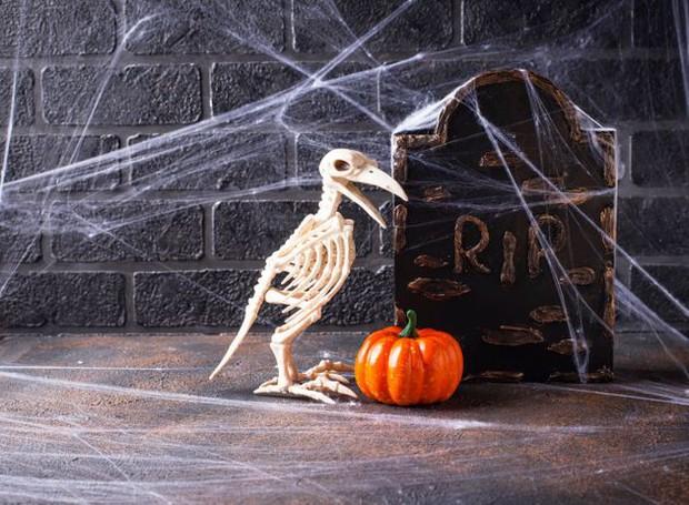 Thói quen dùng mạng nhện giả trang trí mùa Halloween: Siêu rẻ và ma mị, nhưng lại là một thảm họa sinh thái thực sự - Ảnh 3.