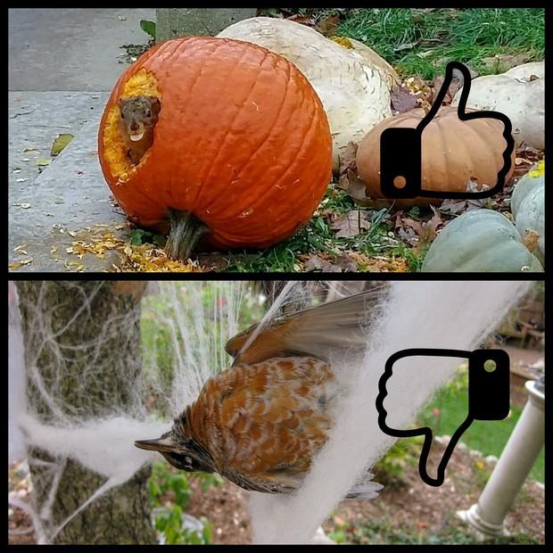 Thói quen dùng mạng nhện giả trang trí mùa Halloween: Siêu rẻ và ma mị, nhưng lại là một thảm họa sinh thái thực sự - Ảnh 4.