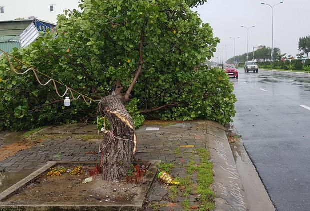 Đà Nẵng: Cây xanh ngã hàng loạt sau bão số 5, nhiều đoạn đường bị ngập khiến giao thông hỗn loạn - Ảnh 3.