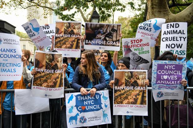Món gan ngỗng nhà giàu xa xỉ chính thức bị cấm bán ở New York vì có hình thức nuôi nhốt quá tàn nhẫn - Ảnh 3.