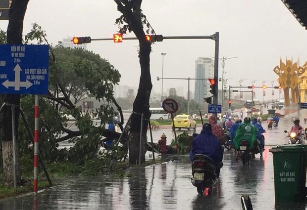 Đà Nẵng: Cây xanh ngã hàng loạt sau bão số 5, nhiều đoạn đường bị ngập khiến giao thông hỗn loạn - Ảnh 5.