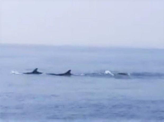 Hiện tượng cực kỳ hiếm gặp: Đàn cá heo cả trăm con bơi tung tăng trên vùng biển ở Hội An - Ảnh 2.