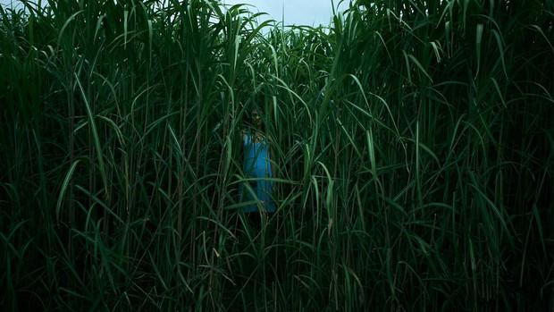 Review bom tấn kinh dị In The Tall Grass: Vài cọng cỏ xanh đu đưa cũng khiến ối người yếu bóng vía phải đóng bỉm - Ảnh 1.