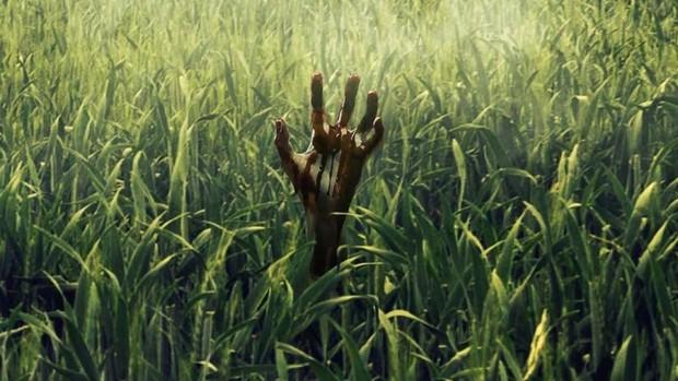 Review bom tấn kinh dị In The Tall Grass: Vài cọng cỏ xanh đu đưa cũng khiến ối người yếu bóng vía phải đóng bỉm - Ảnh 7.