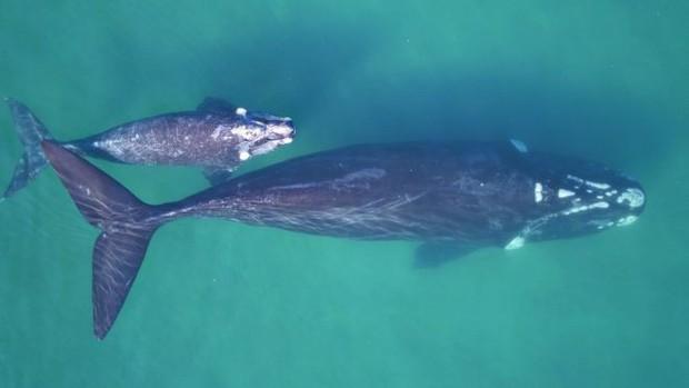 Một con cá voi có thể nặng đến cả trăm tấn nhưng làm sao khoa học biết được điều đó? - Ảnh 3.