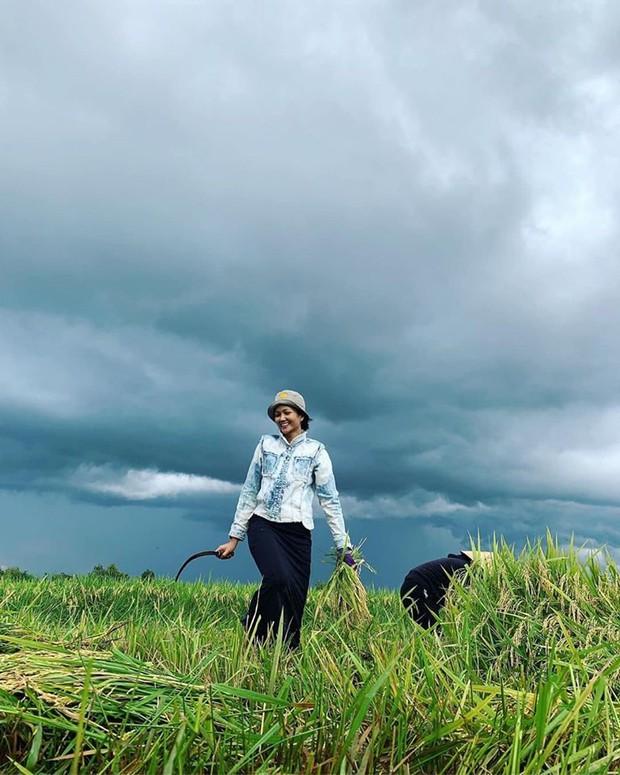 Hết Đen Vâu chăn lợn, đến HHen Niê tuyên bố dừng đồng hành với HHHV để về quê... hí hửng ra ruộng gặt lúa - Ảnh 1.