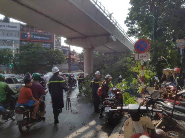 Hà Nội: 2 cây phượng lớn đổ chắn kín đường sau cơn mưa giông - Ảnh 2.