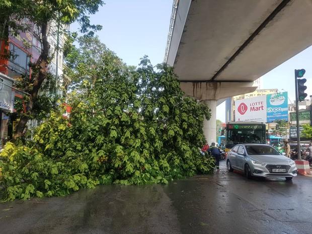 Hà Nội: 2 cây phượng lớn đổ chắn kín đường sau cơn mưa giông - Ảnh 3.