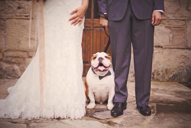 22 khoảnh khắc đáng yêu của chó Bull khiến bạn muốn ôm ngay một em về nhà - Ảnh 10.
