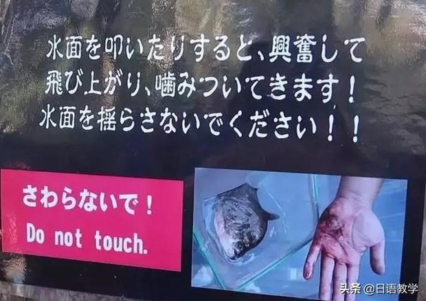 Sở thú nguy hiểm nhất nước Nhật, muốn vào phải ký bản cam kết tử thần nhưng vẫn thu hút rất đông khách du lịch tò mò ghé thăm - Ảnh 8.