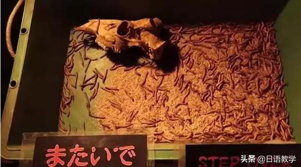 Sở thú nguy hiểm nhất nước Nhật, muốn vào phải ký bản cam kết tử thần nhưng vẫn thu hút rất đông khách du lịch tò mò ghé thăm - Ảnh 9.