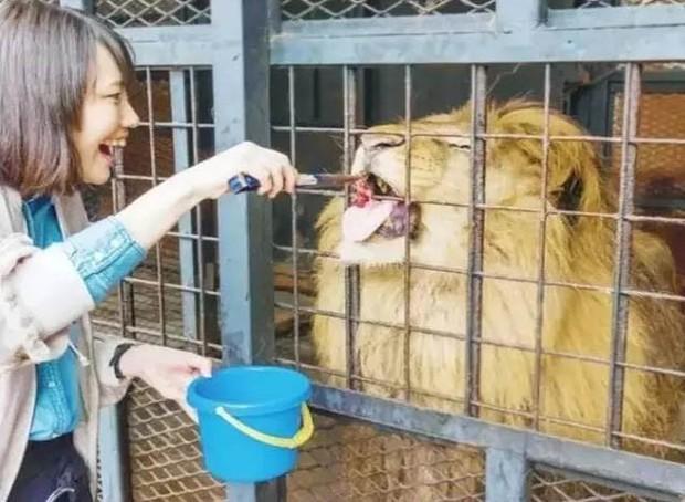 Sở thú nguy hiểm nhất nước Nhật, muốn vào phải ký bản cam kết tử thần nhưng vẫn thu hút rất đông khách du lịch tò mò ghé thăm - Ảnh 4.