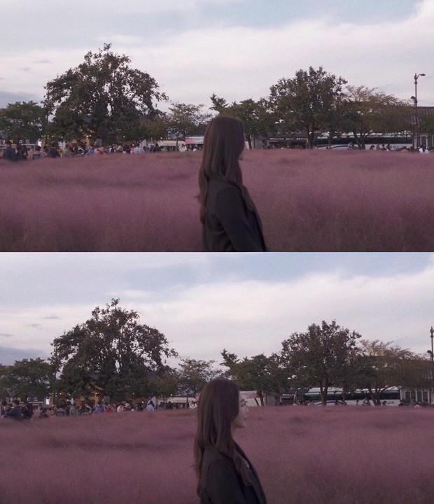 Mỗi độ thu về, cánh đồng cỏ hồng ở Hàn Quốc lại là địa điểm được hội thích sống ảo check in nhiều nhất trên Instagram - Ảnh 7.