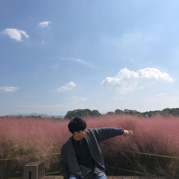 Mỗi độ thu về, cánh đồng cỏ hồng ở Hàn Quốc lại là địa điểm được hội thích sống ảo check in nhiều nhất trên Instagram - Ảnh 5.