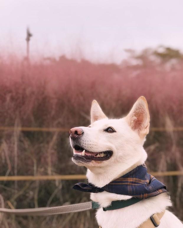 Mỗi độ thu về, cánh đồng cỏ hồng ở Hàn Quốc lại là địa điểm được hội thích sống ảo check in nhiều nhất trên Instagram - Ảnh 8.
