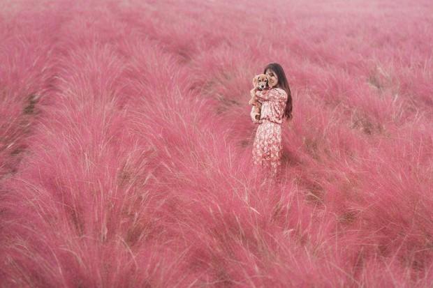 Mỗi độ thu về, cánh đồng cỏ hồng ở Hàn Quốc lại là địa điểm được hội thích sống ảo check in nhiều nhất trên Instagram - Ảnh 1.