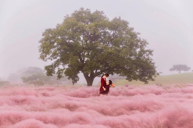 Mỗi độ thu về, cánh đồng cỏ hồng ở Hàn Quốc lại là địa điểm được hội thích sống ảo check in nhiều nhất trên Instagram - Ảnh 6.