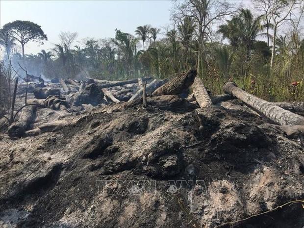 Bolivia dập tắt hoàn toàn các đám cháy rừng Amazon kéo dài suốt 2 tháng - Ảnh 1.