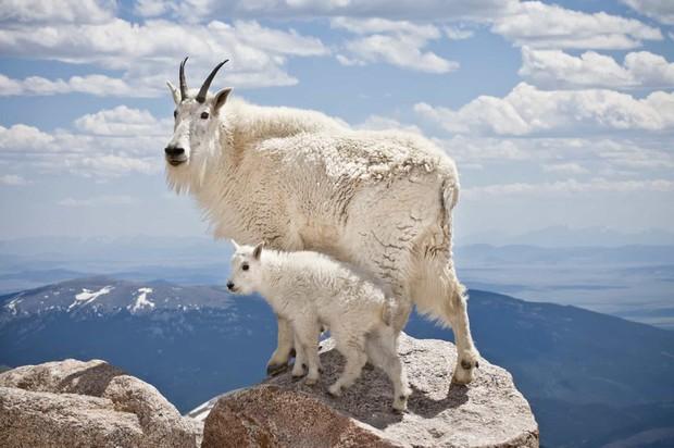 Tan chảy với những bức ảnh gia đình đáng yêu của các loài động vật - Ảnh 11.