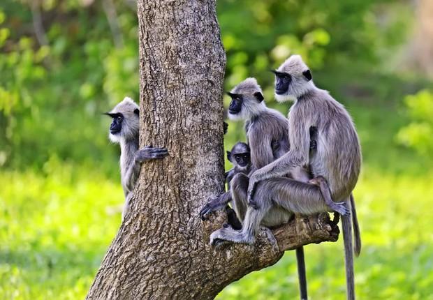 Tan chảy với những bức ảnh gia đình đáng yêu của các loài động vật - Ảnh 12.