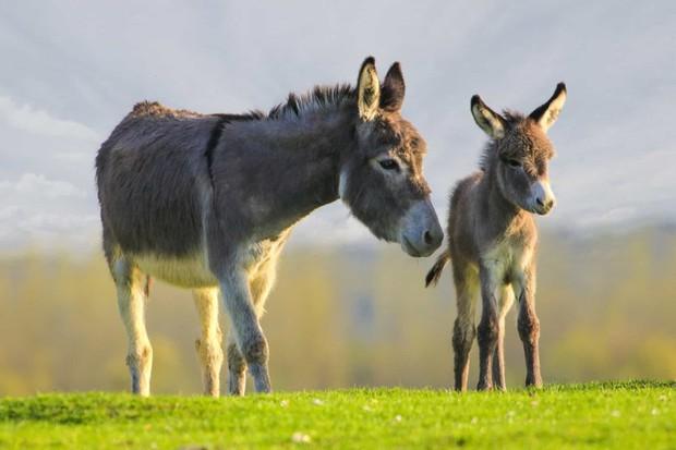 Tan chảy với những bức ảnh gia đình đáng yêu của các loài động vật - Ảnh 14.