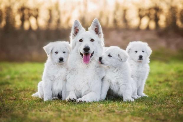 Tan chảy với những bức ảnh gia đình đáng yêu của các loài động vật - Ảnh 15.