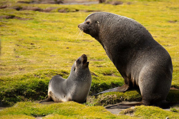 Tan chảy với những bức ảnh gia đình đáng yêu của các loài động vật - Ảnh 16.