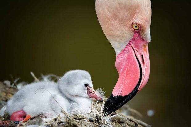 Tan chảy với những bức ảnh gia đình đáng yêu của các loài động vật - Ảnh 17.