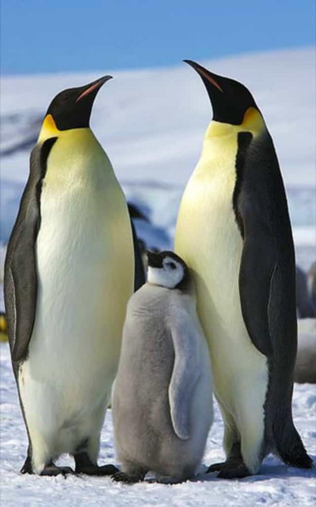 Tan chảy với những bức ảnh gia đình đáng yêu của các loài động vật - Ảnh 19.
