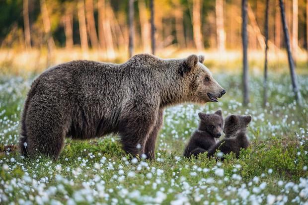 Tan chảy với những bức ảnh gia đình đáng yêu của các loài động vật - Ảnh 3.