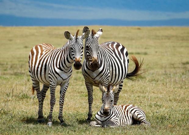 Tan chảy với những bức ảnh gia đình đáng yêu của các loài động vật - Ảnh 4.